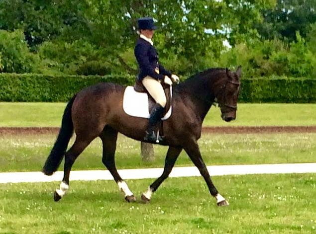 Claire Fielding\'s ex race horse shows them how to to dressage at Intermediate.