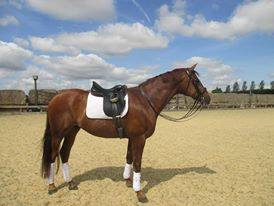 Dressage Diva concentrates on dancing now he\'s on a Bespoke.
