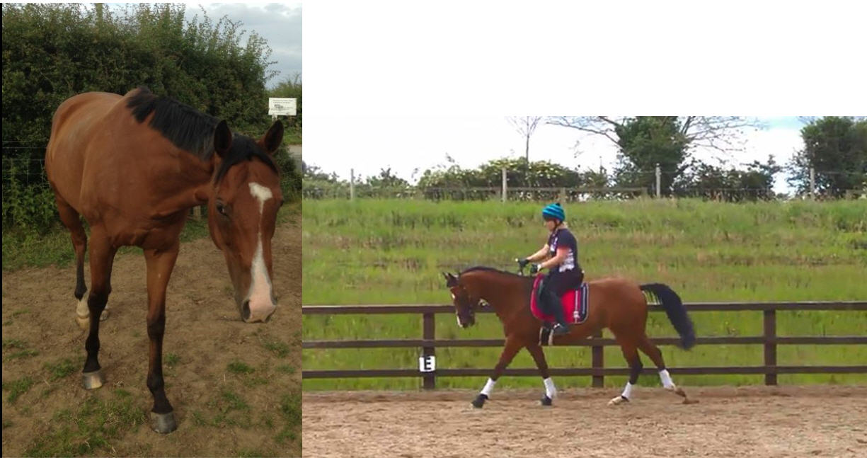 Retrained Racehorse to dressage