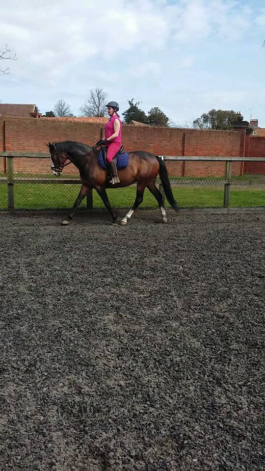 TB Ex Racer - Relaxed And Taking Training In its Stride
