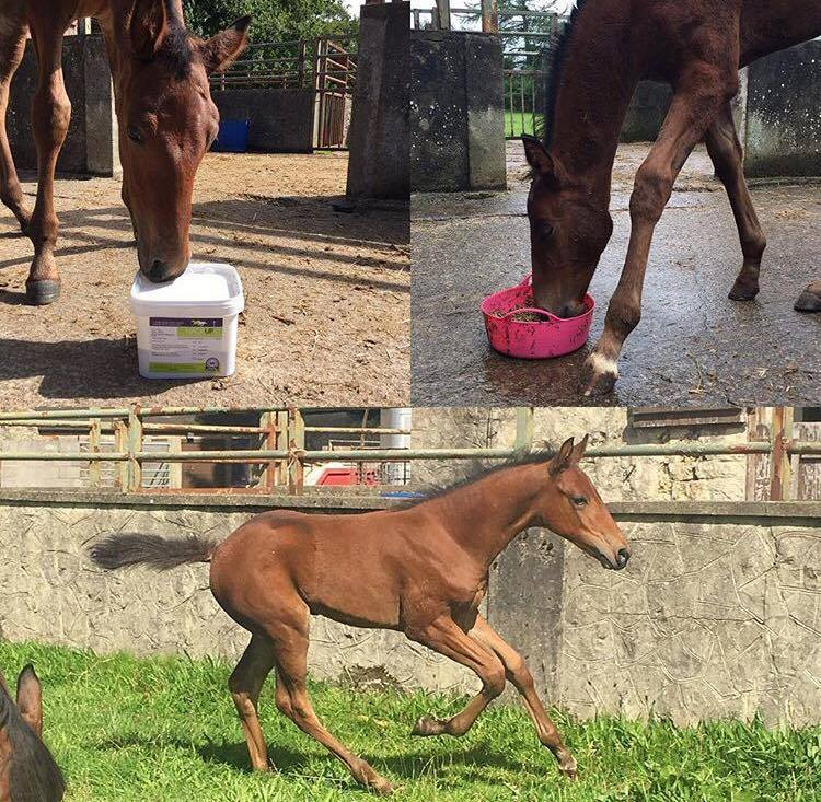 From Gangly Filly to Beautiful Straight Moving Horse With Help From Bespoke