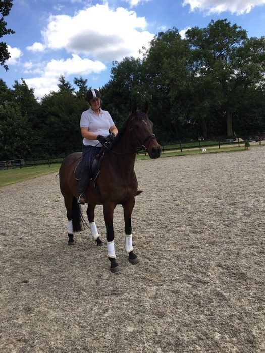 Sir P - From Racing To Dressage With Hack Up Bespoke
