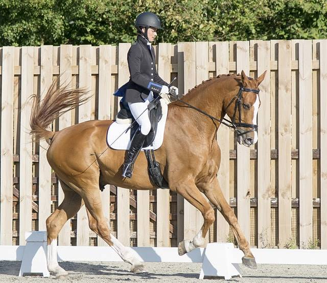 Garf - Improved Horse on Hack Up Digest / Toning / Immune Bespoke
