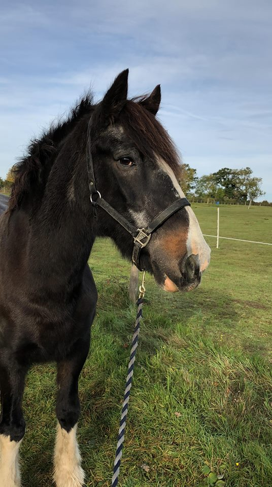 Bob has been supported with bespoke supplements for years supported by our vet