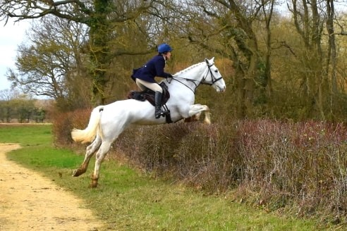 Karen's Hunters And Eventers All Going Strong on Hack Up