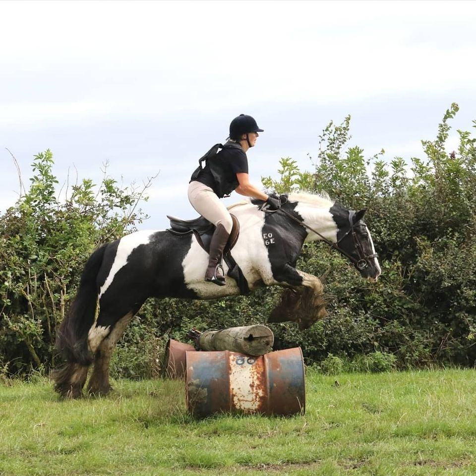 Flying cobs that do Elem dressage, keep supple on Joint Bespoke