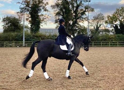 Stunning PSG rider and customer Tricia Baker gives her take on Hack Up Bespoke and the Buy & Book (subscription) facility.