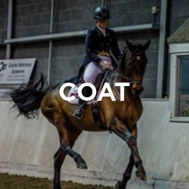 Equine coat supplements