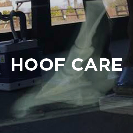 Equine hoof care supplements