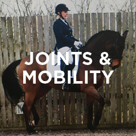 Equine joints and mobility supplement