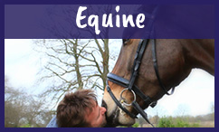 Equine supplement formulation